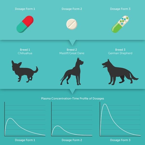BLOG_The-Best-Meds-for-Man's-Best-Friend-PBPK-Models-for-Animal-Health_2