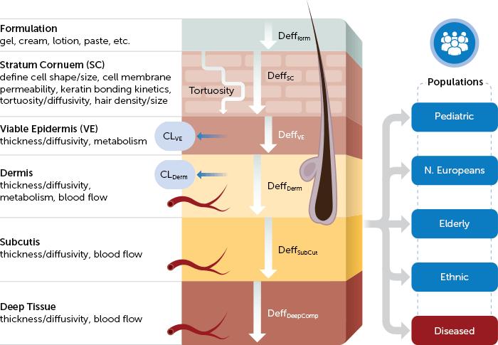 Simcyp MechDermA Model
